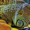 видеть большую ящерицу во сне
