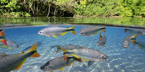 река с рыбой