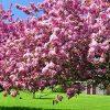 видеть во сне цветущий сад