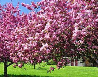 К чему снится цветущий сад?