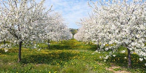 к чему снится цветущий сад