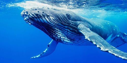 киты в море во сне