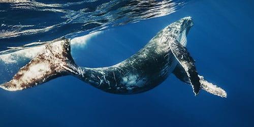 к чему снятся киты в море