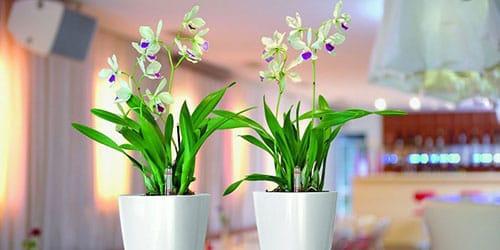 к чему снятся комнатные растения
