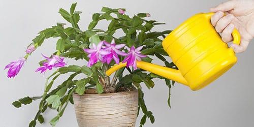 поливать цветок