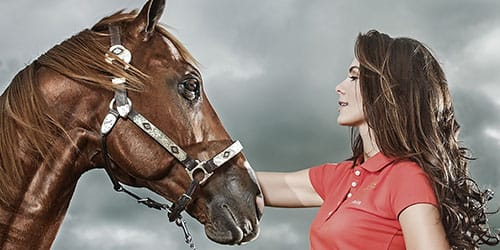видеть во сне коричневую лошадь