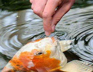 Кормить рыбу