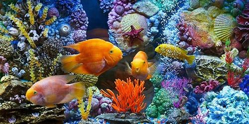к чему снится кормить рыбу