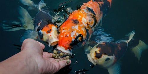 рыба ест