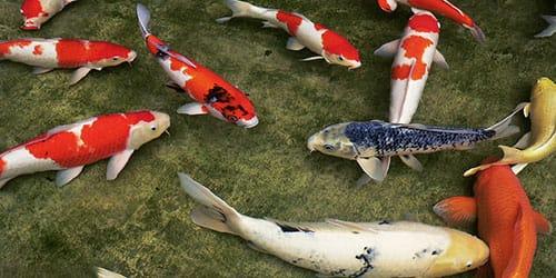 плавает рыбка