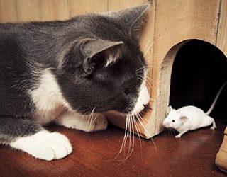 Во сне кошка поймала мышь