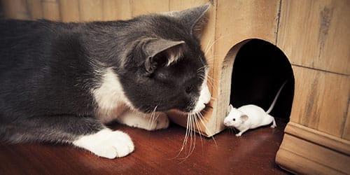 к чему снится что кошка поймала мышь