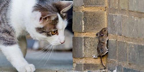 охота на мышку