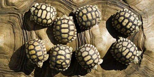 видеть во сне маленькую черепаху