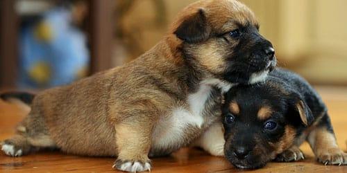 маленькие собачки