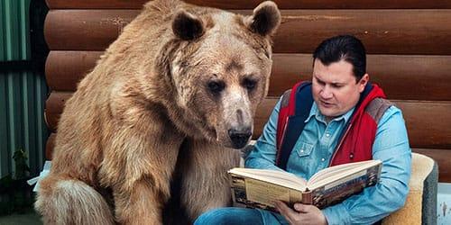 видеть во сне медведя в доме