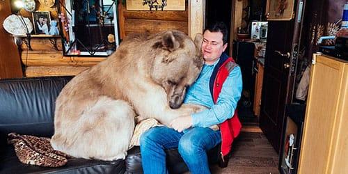 к чему снится медведь в доме