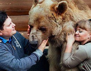 Медведь в доме