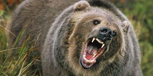 напал медведь во сне