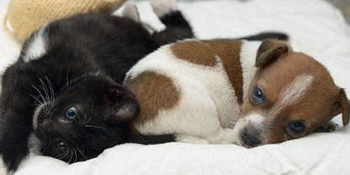 котик и щенок