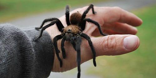 к чему снится что паук кусает