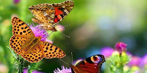 разноцветные бабочки во сне