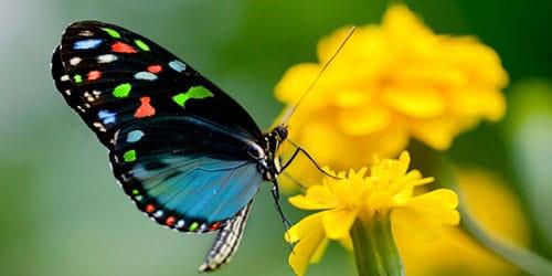 к чему снятся разноцветные бабочки