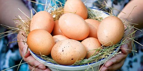 яйца в чашке