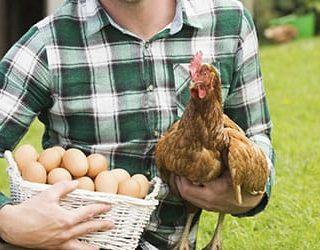 Собирать куриные яйца