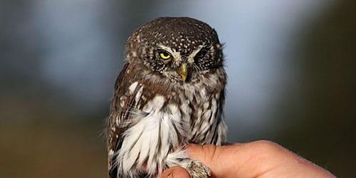 птица сидит на руке