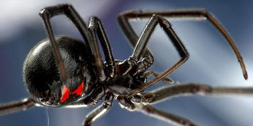 увидеть во сне черного паука