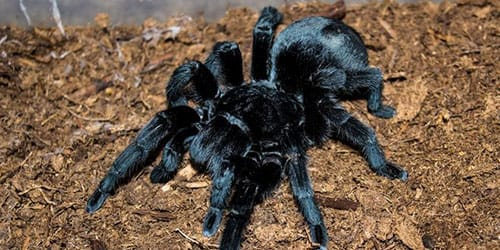 видеть черного паука во сне