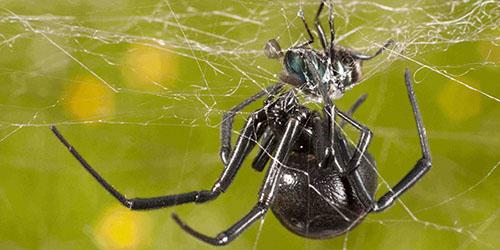 приснился паук на паутине