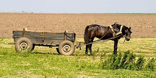 к чему снится лошадь с телегой