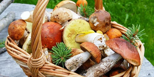 к чему снится много грибов