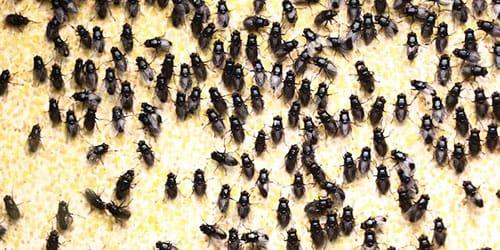 к чему снятся мухи в доме