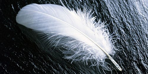 белое перышко
