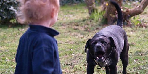 пес лает на ребенка