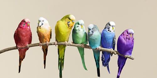 яркие птички