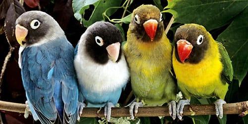 видеть во сне разноцветных попугаев
