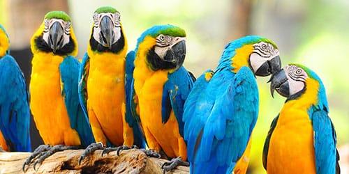 к чему снятся разноцветные попугаи