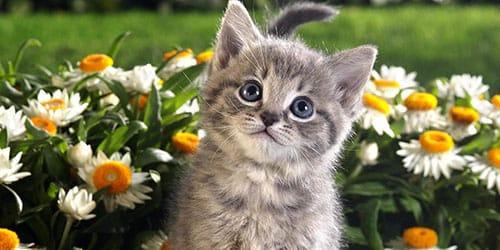 видеть во сне серого котенка