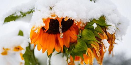 приснилось выпал снег летом