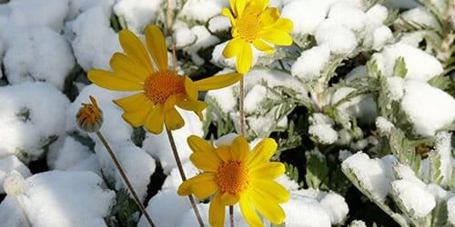 да чаго сніцца снег летам