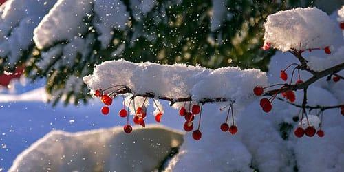 к чему снится снег за окном