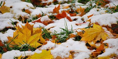 снежок пошел осенью