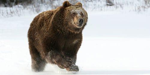 убегать от медведя во сне