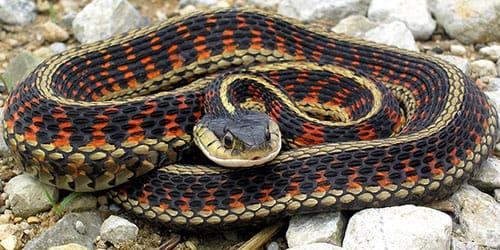 к чему снится убегать от змеи