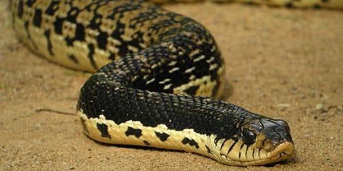 змея ползет