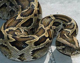 Убегать от змеи